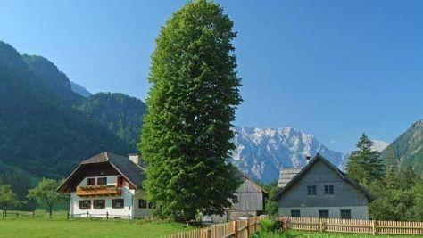 Turistična kmetija Juvanija, Logarska dolina, Solčava - Objekt