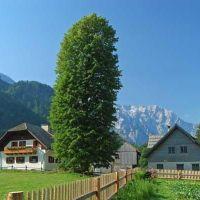 Turistična kmetija Juvanija, Logarska dolina, Solčava - Obiekt